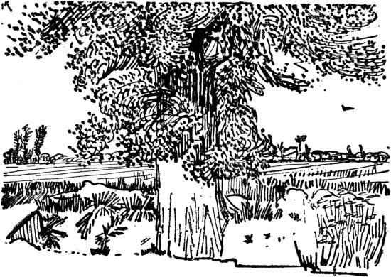 Vincent van Gogh - Tree