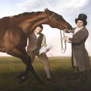 Equine & Equestrian
